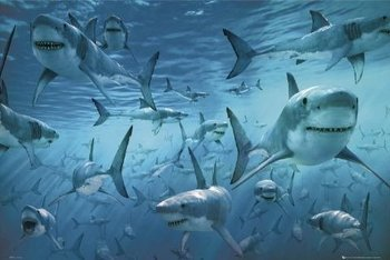 plakat REKINY - SHARK INFESTED